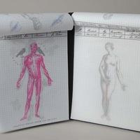 Anatomy3MedRes.jpg